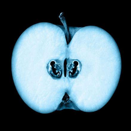 elma - apple