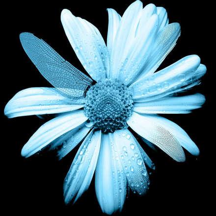 çiçek - flower