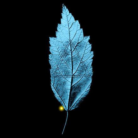 yaprak - leaf